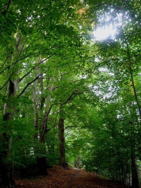 Linden im Steinbergwald